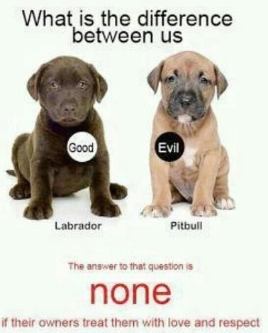 puppies and difference of pitbull