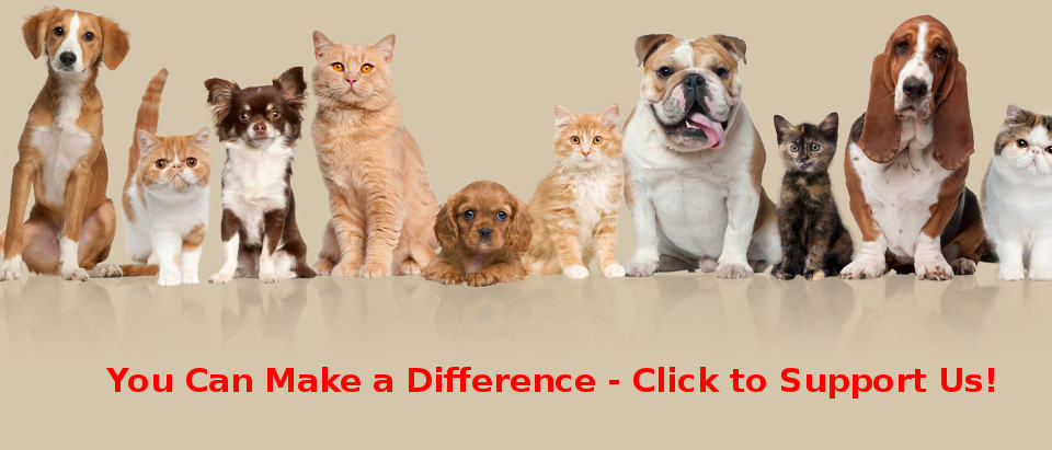Sterling Animal Shelter Donation Banner