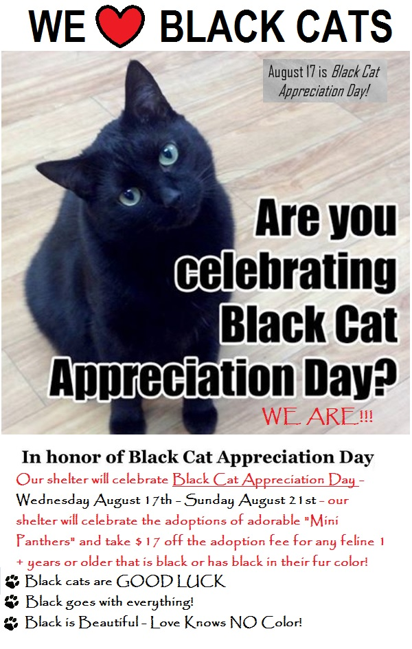 2016 black cat adoption special august 17 thro aug 23