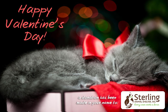 Cute Kitten Happy Valentine S Day Animal Shelter Inc