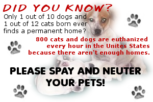 Image result for spay and neuter